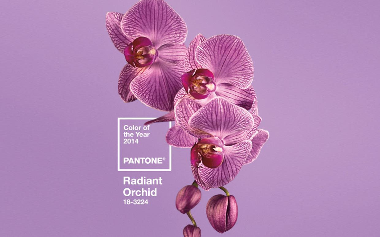 RADIANT ORCHID: COLORE DELL'ANNO 2014